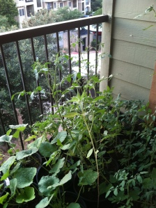 My 2013 apartment garden. It's a little out of control.