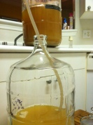 Racking the Wheat Beer