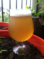 Passion Fruit Wheat 1