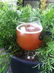 Barleywine in the Fern